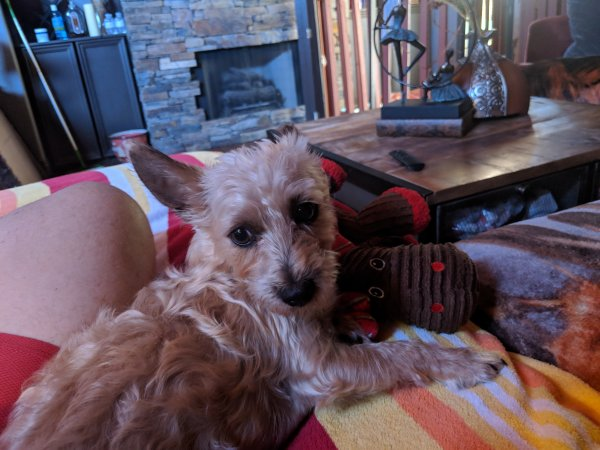 Lost Mutt in Arcadia, CA US