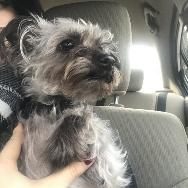 Found Dog in Columbia, MD US