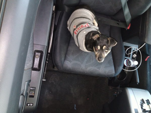 Found Chihuahua in Las Vegas, NV US