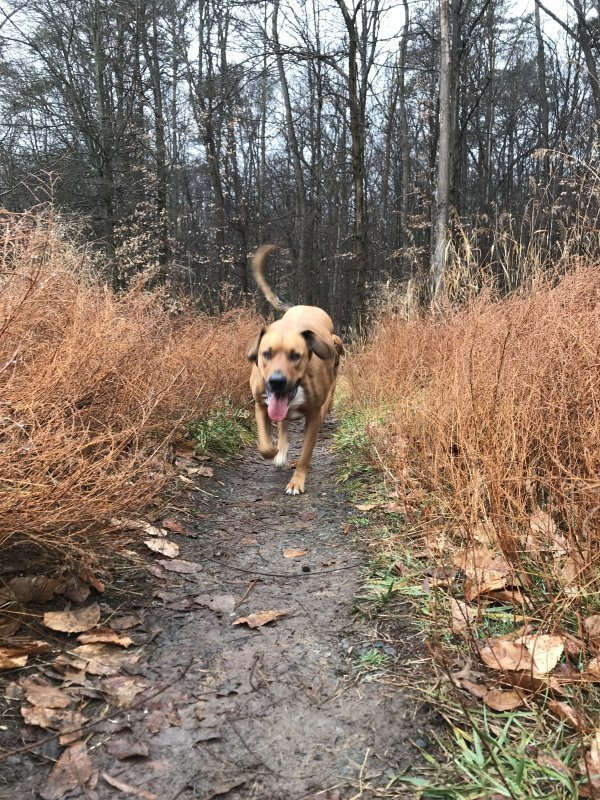 Lost Mutt in Baltimore, MD US