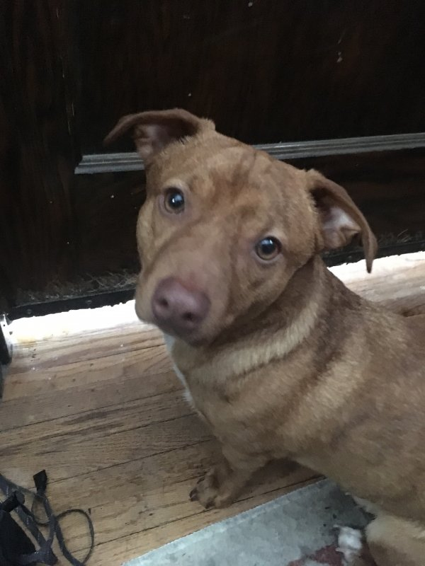 Found Mutt in Minneapolis, MN US