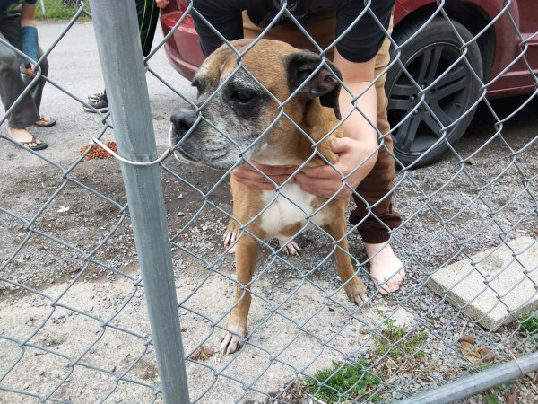 Safe Boxer in Middlesboro, KY US