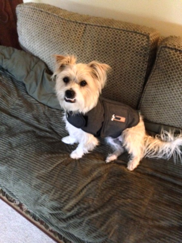 Lost Cairn Terrier in Lecompton, KS US