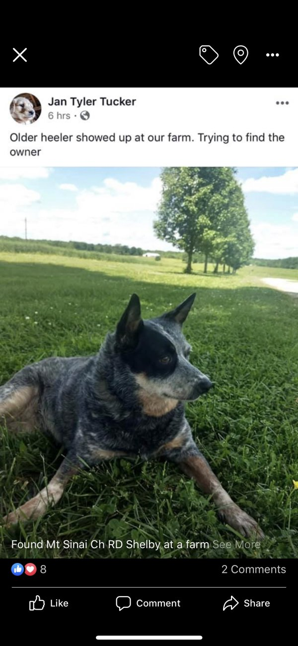 Safe Australian Cattle Dog in Gastonia, NC US