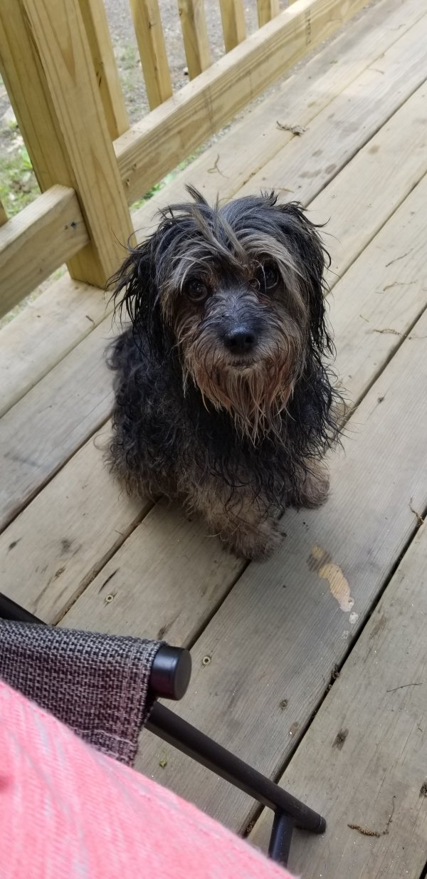 Found Dog in Waterbury, CT US