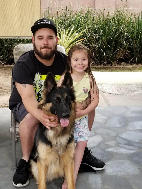 Safe German Shepherd Dog in Ontario, CA US
