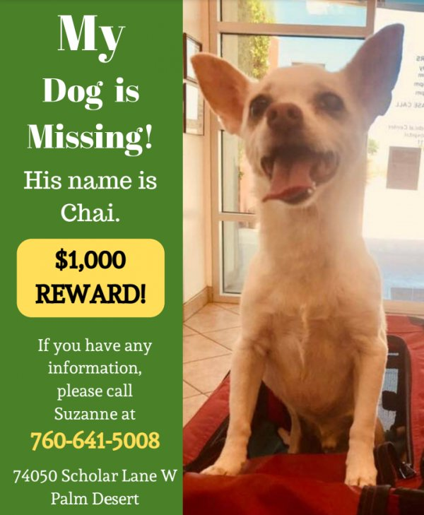 Lost Chihuahua in Palm Desert, CA US