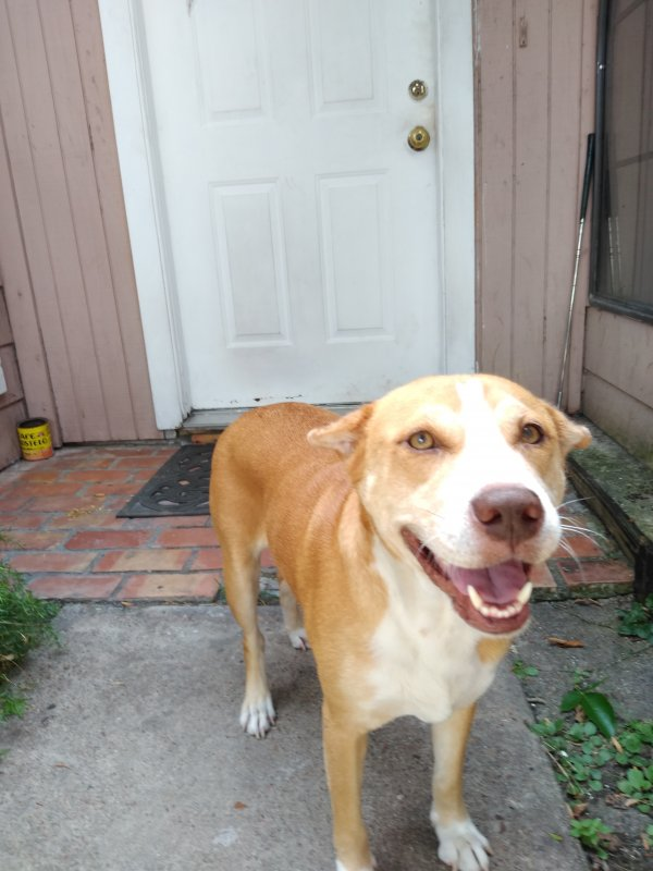 Safe Dog in Houston, TX US