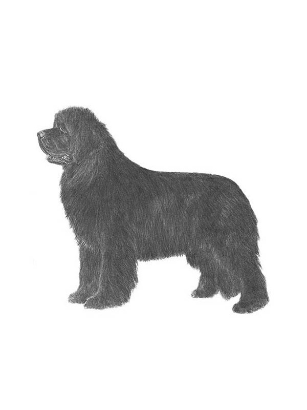 Lost Newfoundland in East Earl, PA US