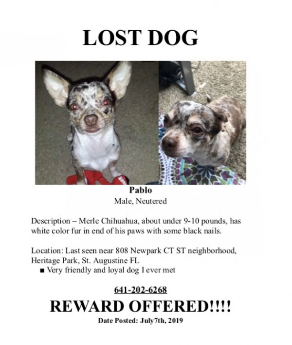 Lost Chihuahua in Saint Augustine, FL US