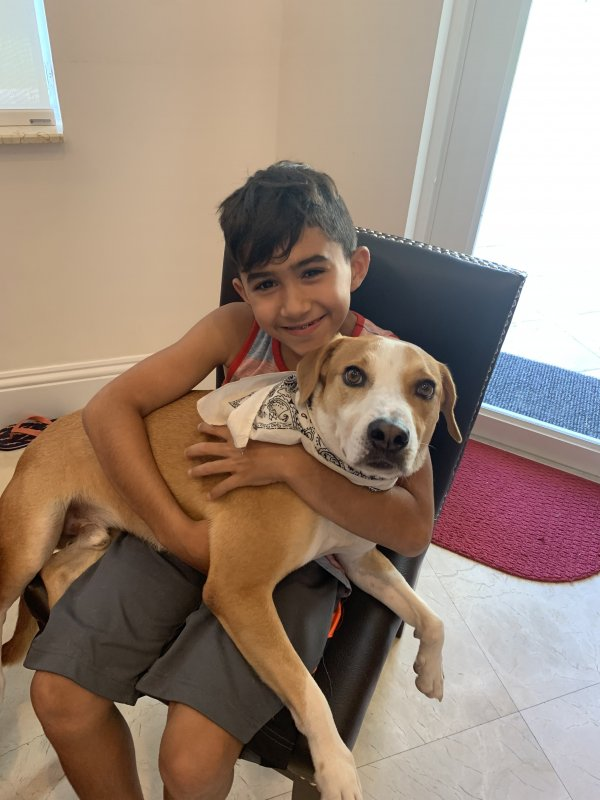 Lost Beagle in Fort Lauderdale, FL US