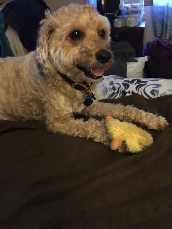 Lost Dog in Hamden, CT US