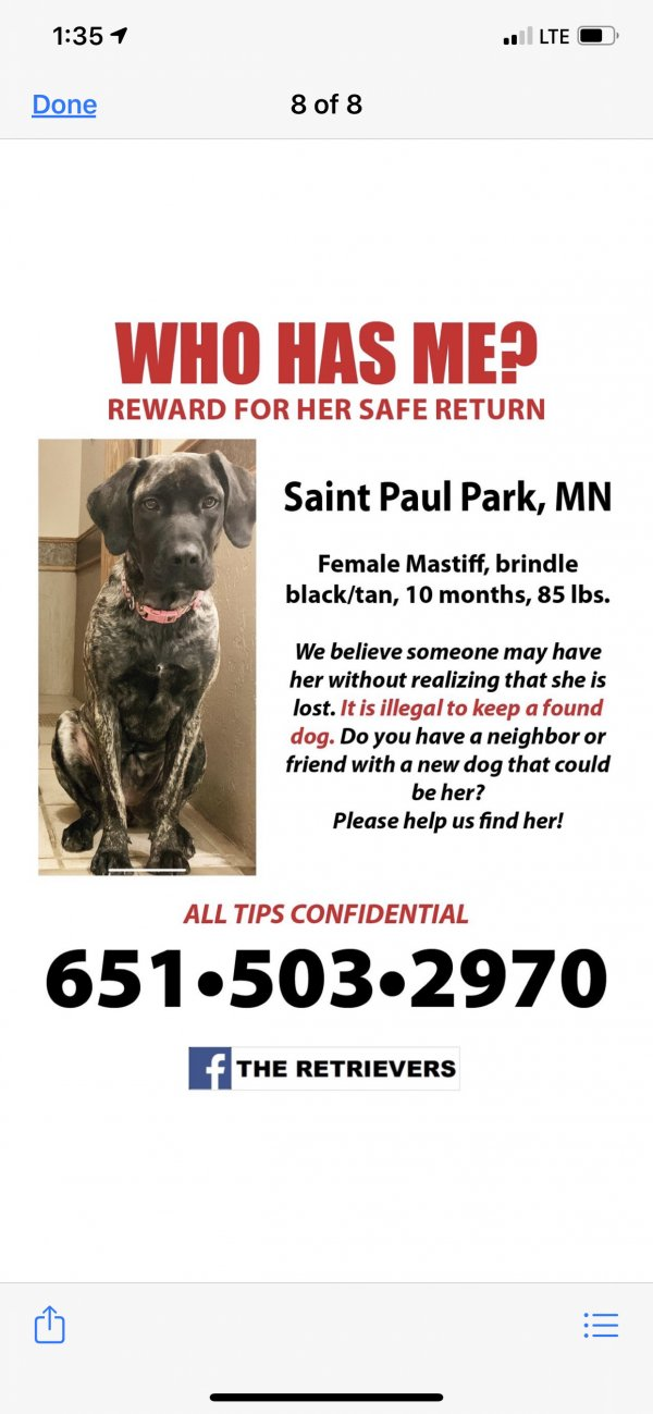 Stolen Mastiff in Saint Paul Park, MN US