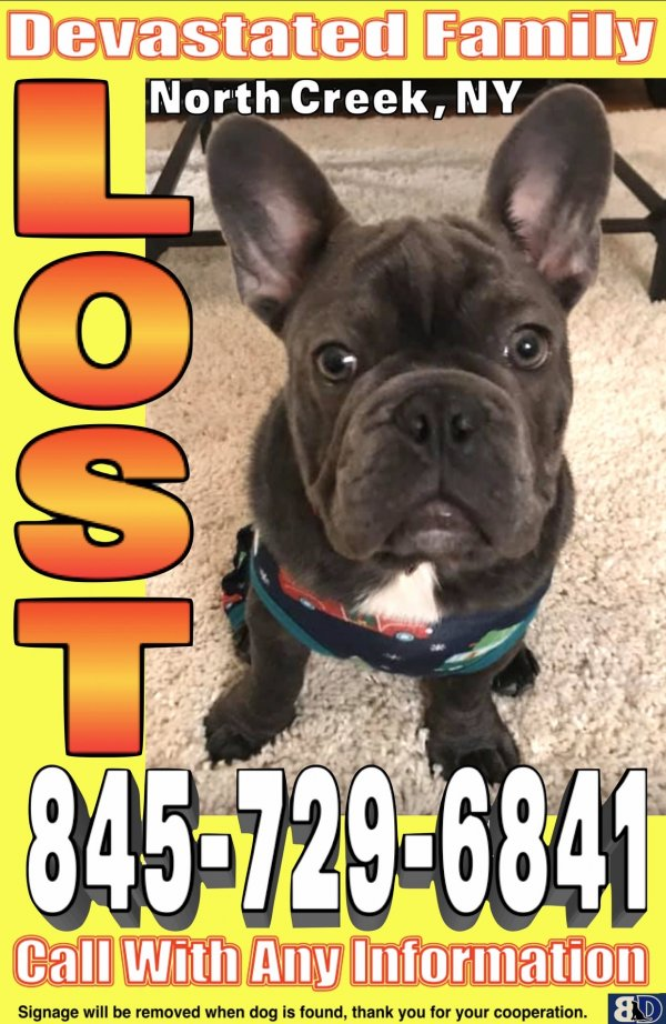 Lost French Bulldog in North Creek, NY US