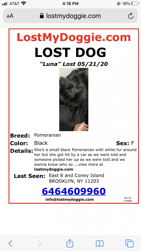 Stolen Pomeranian in Brooklyn, NY US