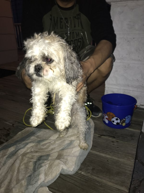 Found Shih Tzu in Baltimore, MD US