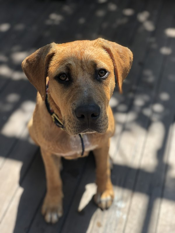 Lost Mutt in Marblehead, MA US