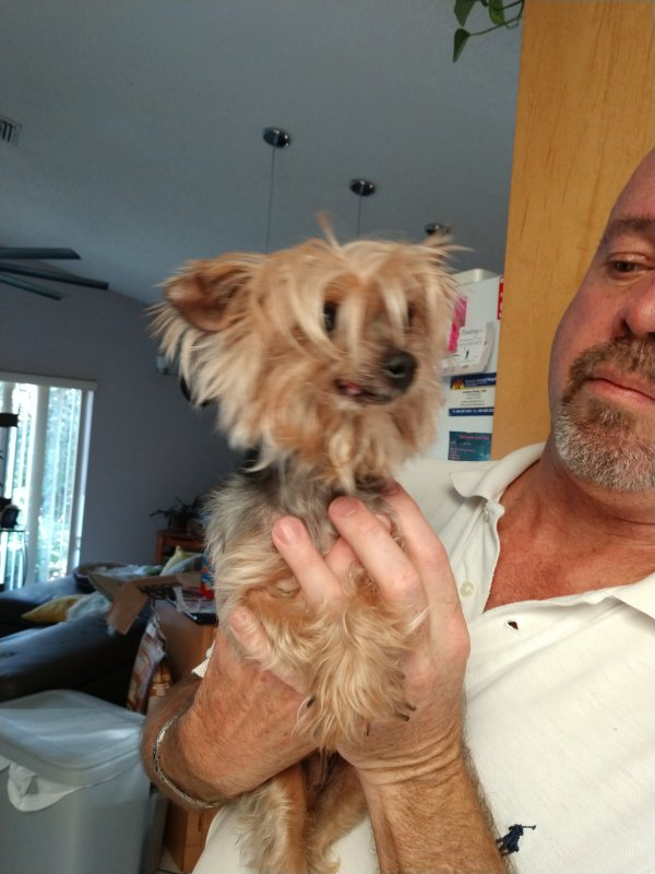 Found Yorkshire Terrier in Fort Lauderdale, FL US