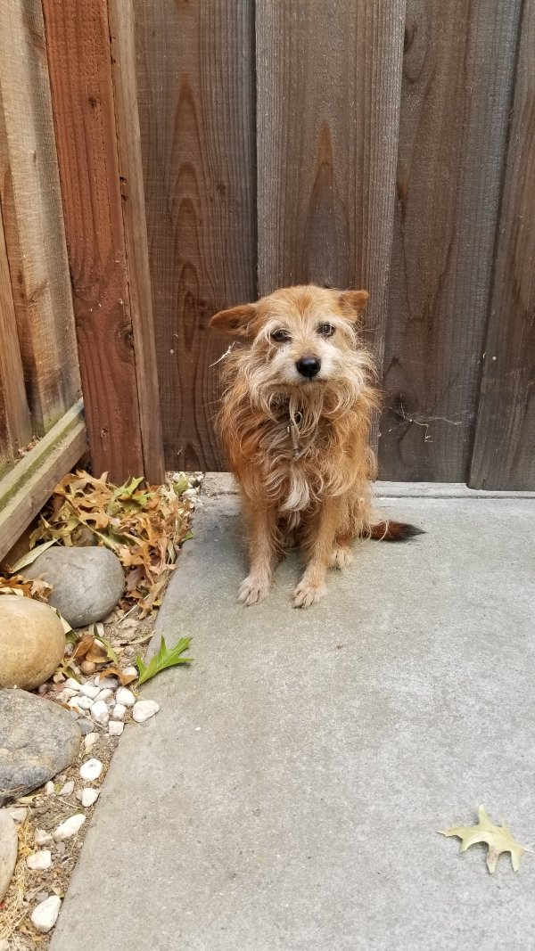 Found Mutt in Oakley, CA US