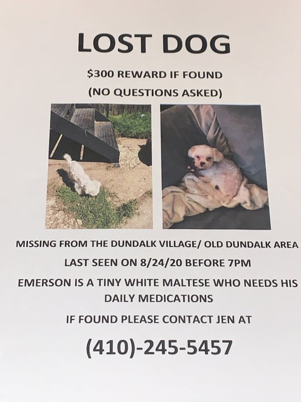 Lost Maltese in Dundalk, MD US