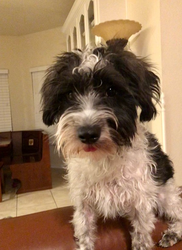 Reunited Lost Mutt in Fort Worth, TX US
