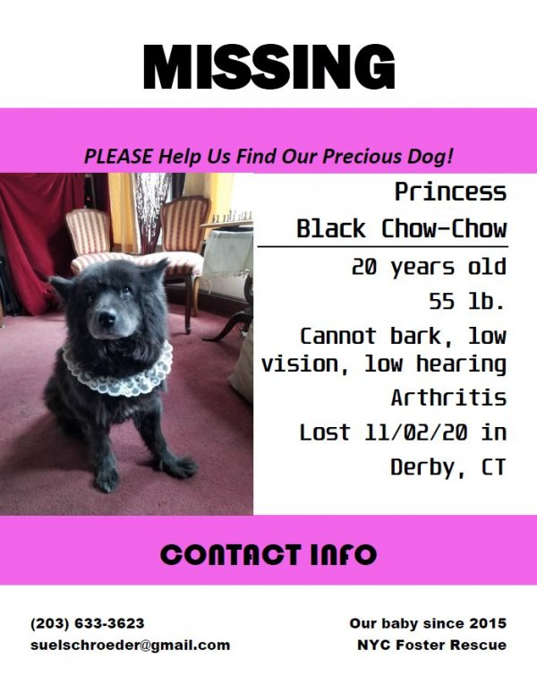Lost Chow Chow in Derby, CT US
