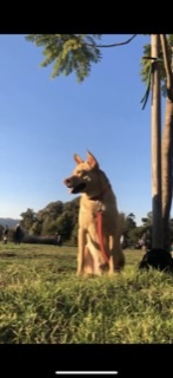 Lost Mutt in Los Angeles, CA US