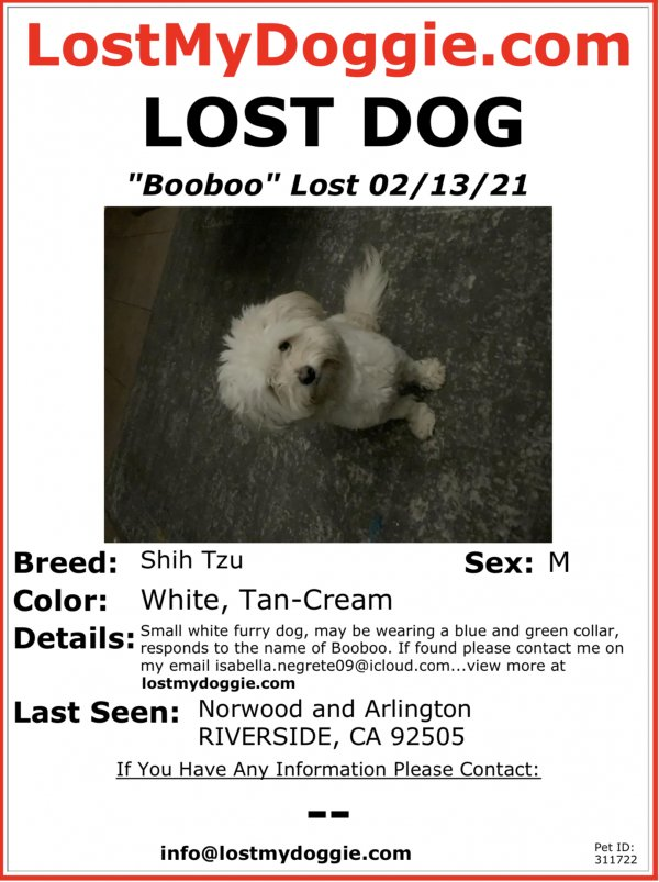 Lost Shih Tzu in Riverside, CA US