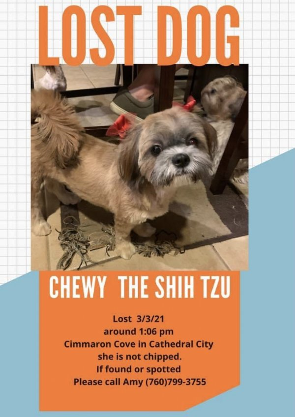 Lost Shih Tzu in Cathedral City, CA US
