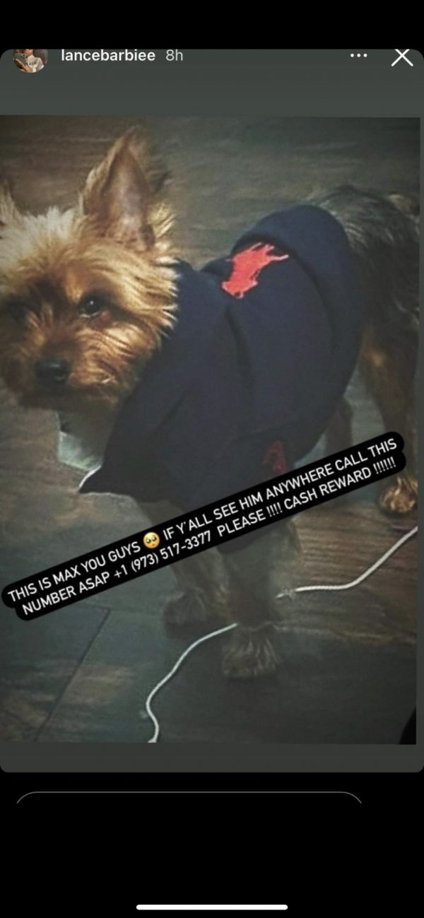 Lost Yorkshire Terrier in Newark, NJ US
