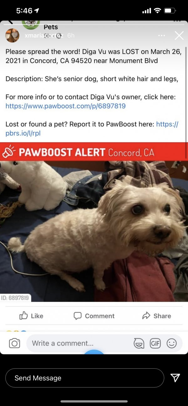 Lost Poodle in Concord, CA US