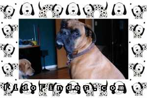 Safe Boxer in San Antonio, TX US